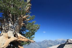 Mount Baden-Powell via Vincent Gap