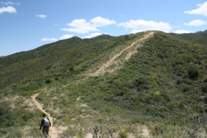 Firebreak Trail / Los Pinetos Loop
