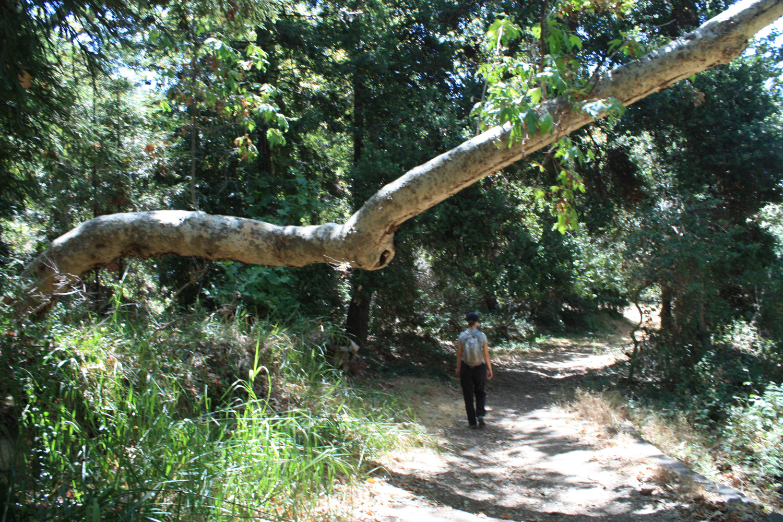 A hiker walks through the woods near Murphy Ranch