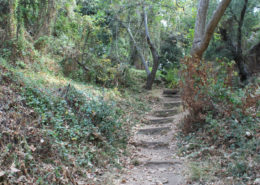 A staircase in the woods at Franklin Canyon