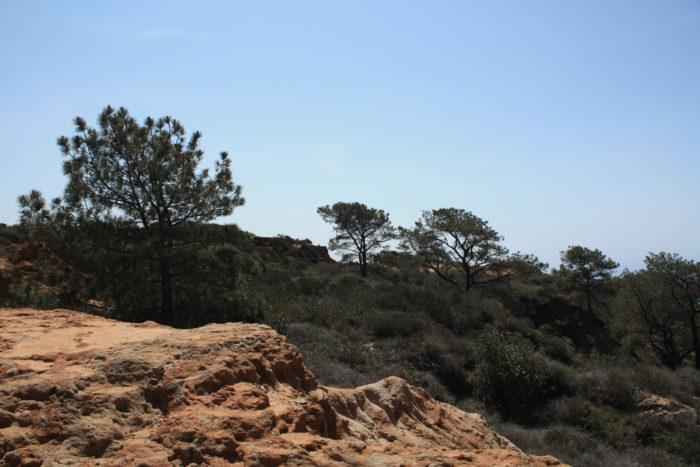 torrey-pines-state-reserve-34