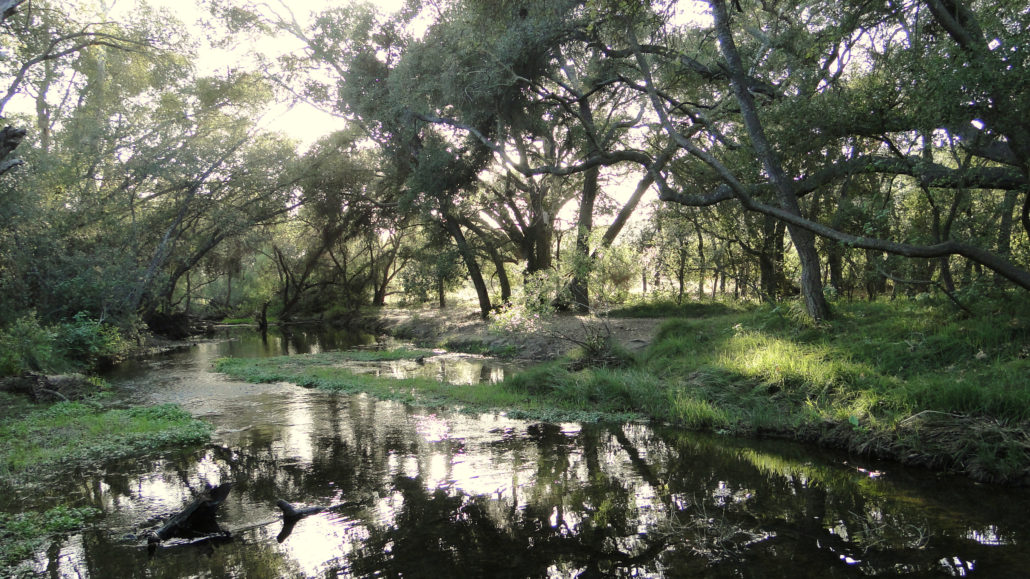 A shaded creek in Penasquitos Canyon