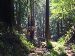 Ewoldsen Trail