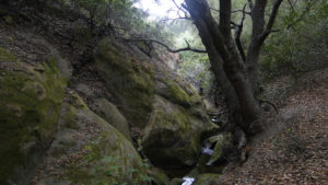 Aliso and Wood Canyons