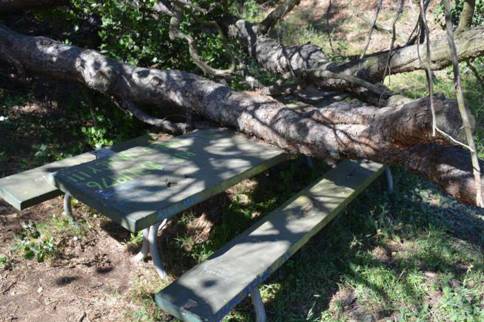 haunted-picnic-table