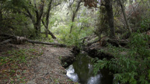 Guajome Regional Park