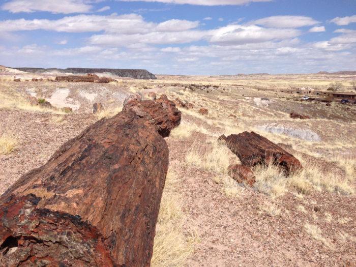 giant logs-4