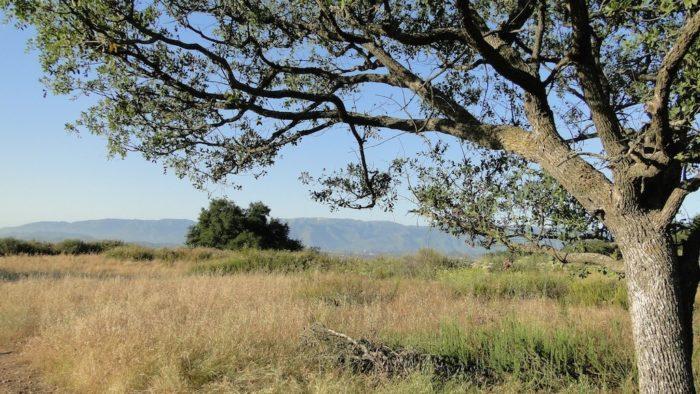 engelmann-oak-loop