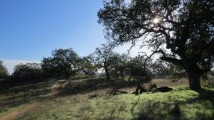 Sylvan Meadows Loop