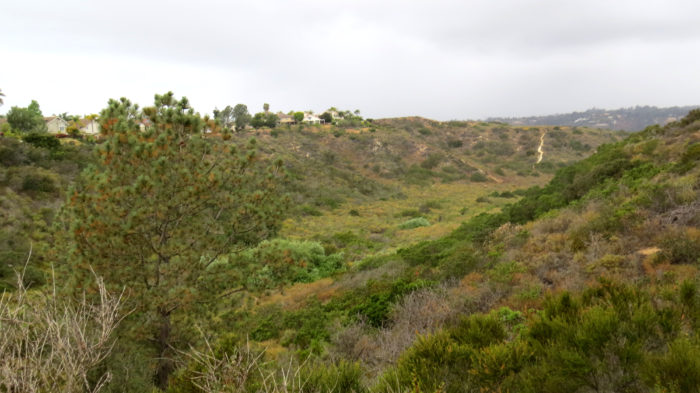 Gonzales Canyon 12