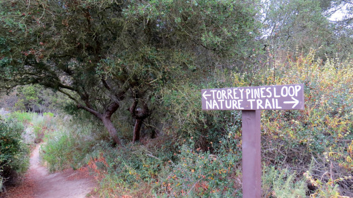 Gonzales Canyon 3