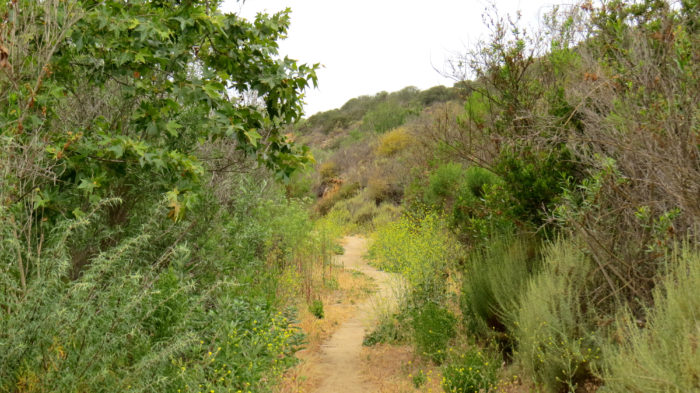 Gonzales Canyon 9