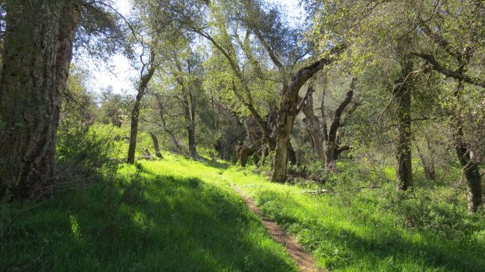 Secret Canyon Trail 2