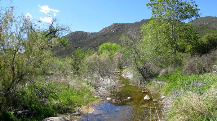 Secret Canyon Trail 8