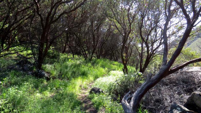 Secret Canyon Trail 10