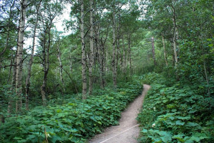 bear's hump waterton lakes-3