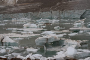 Angel Glacier at Mount Edith Cavell