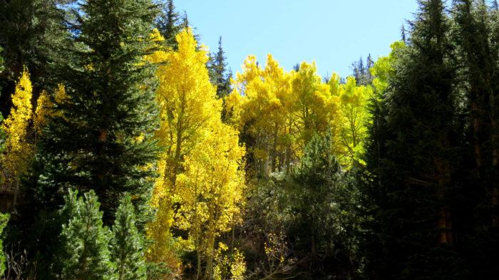 Lundy Canyon (11)