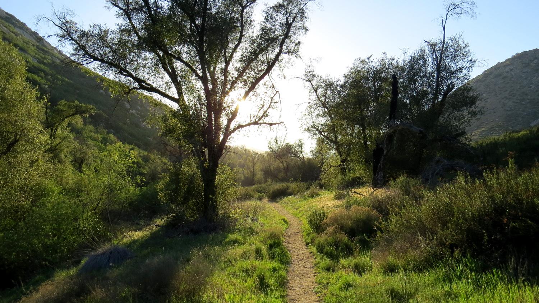 BioBlitz the San Jacinto Mountains, Get a Free Shirt | Modern Hiker