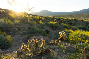 Cactus Loop
