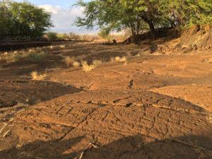 Puako Petroglyph Park