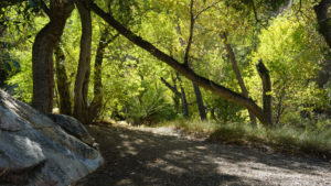 Horsethief Creek and Cactus Spring