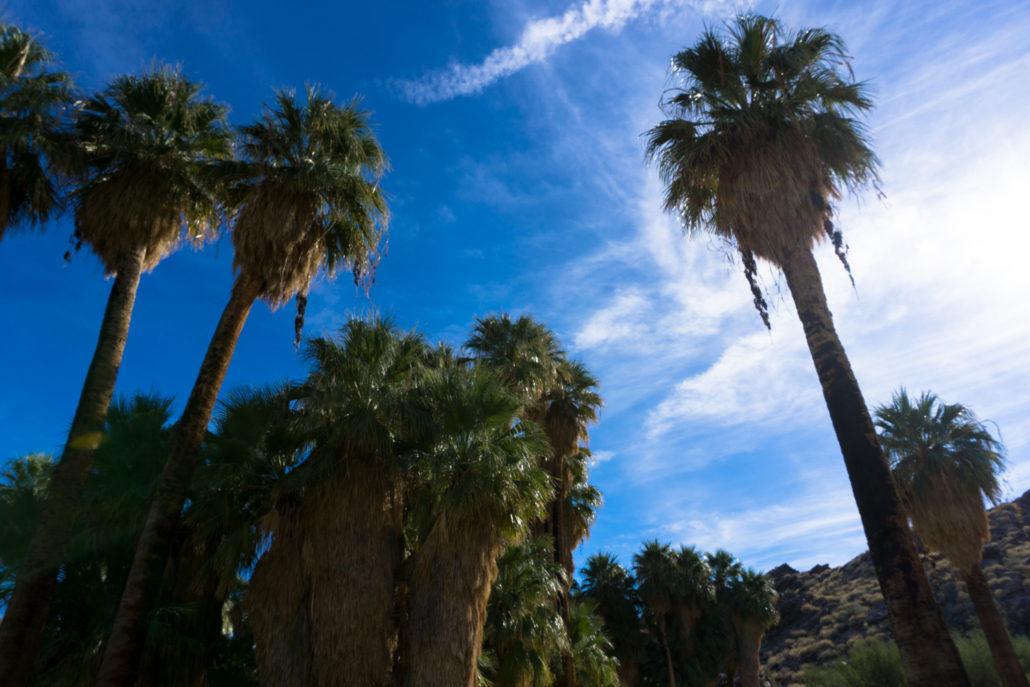 Andreas Canyon in the Santa Rosa and San Jacinto National Monument