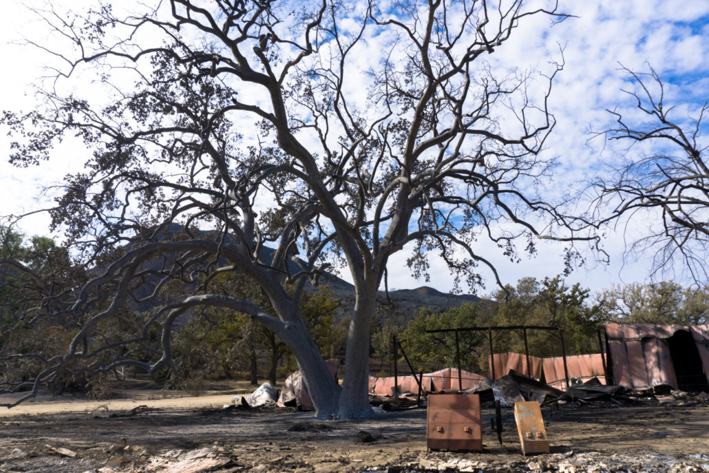 witness tree in paramount ranch 2018 woolsey fire