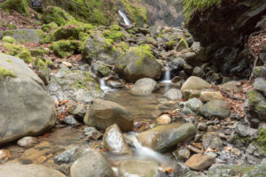 Uvas Canyon Waterfall Loop