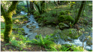 Cataract Creek-Benstein Loop