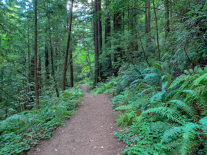 Whittemore Gulch-Purisima Creek Loop