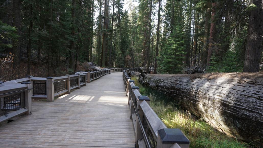 Big Trees Loop along the Fallen Monarch