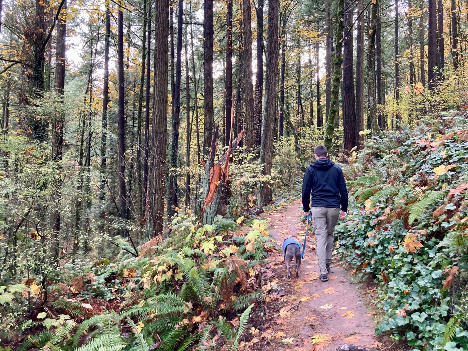 Join the Pack Walk Challenge This Month | Modern Hiker